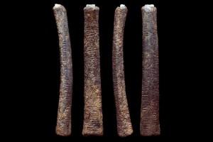 Ishango bones